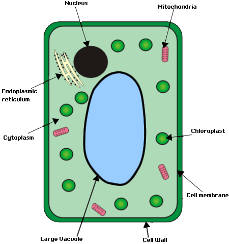 Gcse Biology Cell Structure